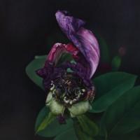 flor-marchita-1-oleo-sobre-lienzo