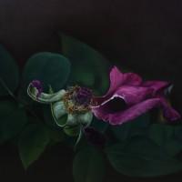 flor-marchita-2-oleo-sobre-lienzo-60x60-1800